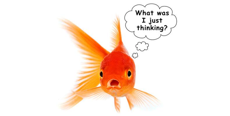https://f.hubspotusercontent20.net/hubfs/497826/blog-files/Goldfish-Thinking.jpg