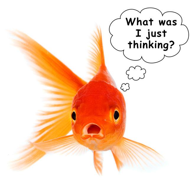 http://cdn2.hubspot.net/hubfs/497826/blog-images/goldfish-thinking-graphic.jpg